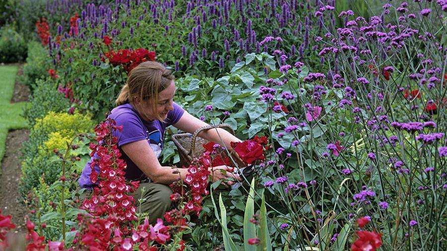 Работа Вашей мечты: в Англии ищут садовника на остров