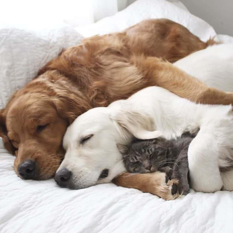 Новый закон про котов и собак 2019. Сколько можно держать кошек и собак в российских квартирах