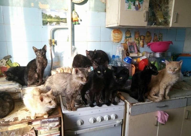 Ограничения для кошек и собак в 2019 году: количество домашних животных в квартирах. Ввели или нет новый закон. Когда будет принят