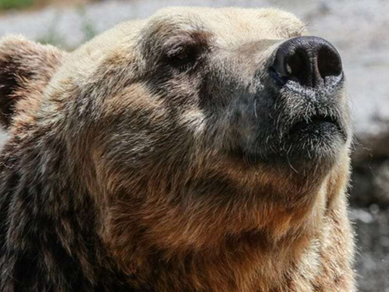 В Саратовской области из цирка сбежала медведица