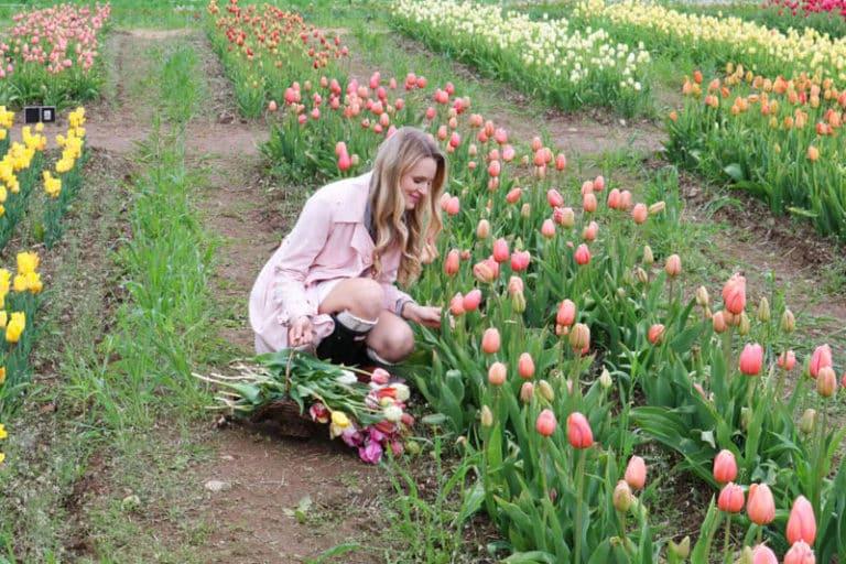 Когда выкапывать тюльпаны после цветения в открытом грунте?