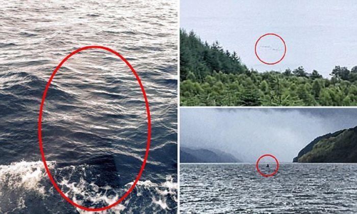 Лох-Несское чудовище всплыло: фото и видео, организуется экспедиция на озеро