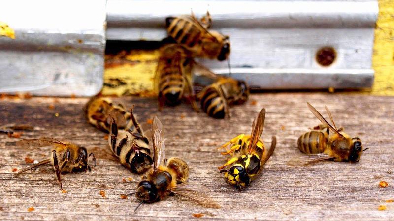 Почему массово гибнут пчёлы по всей России