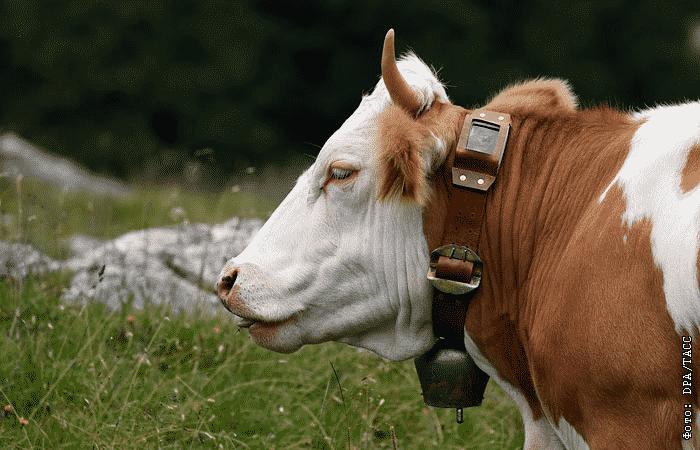 Госдума разрешила шпионские гаджеты для коров и собак - закон о шпионских гаджетах принят