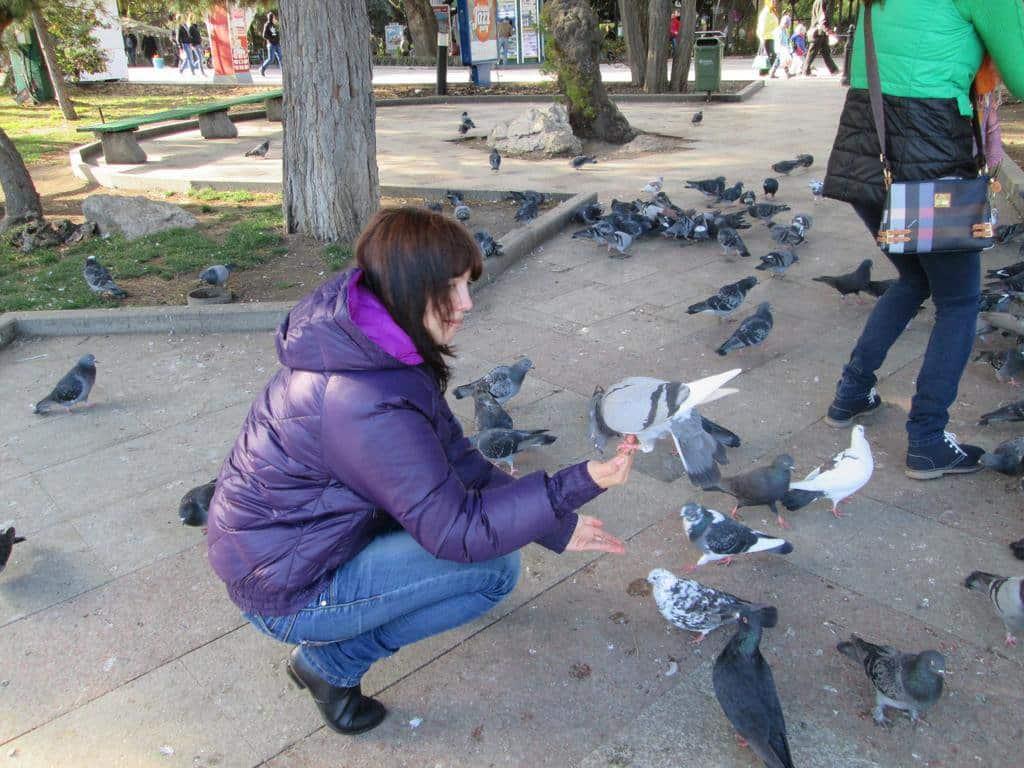 В Магадане запретили кормить голубей в общественных местах