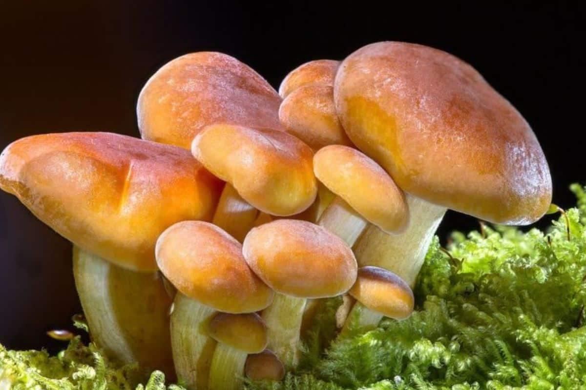 МЧС предупреждает: съедобные грибы также могут нести угрозу здоровью