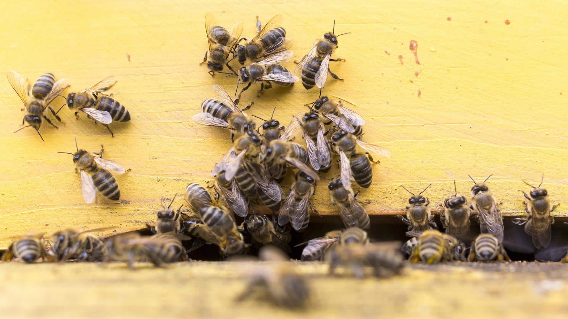 Массовая гибель пчел в России: причины, какой нанесён ущерб