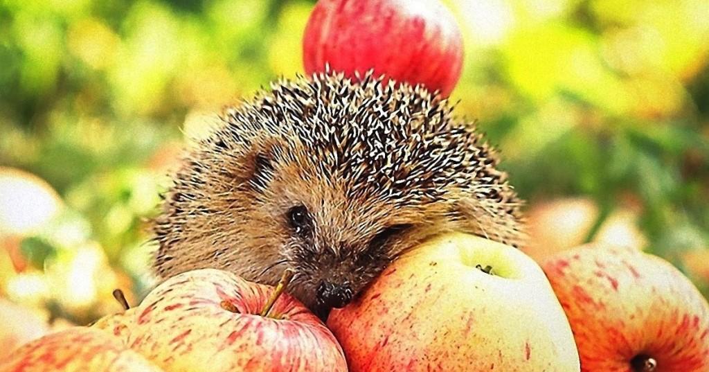 Яблочный Спас в 2019 году: какого числа будет Яблочный и Медовый спас