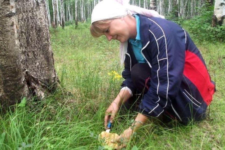 Грибы в Ленинградской области в июле-августе 2019: какие собирают, что нужно знать, чтобы не отравиться