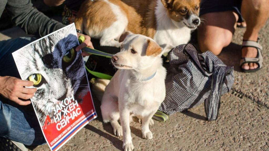 Налог на домашних животных: введут или нет, сумма, сколько собак и кошек можно держать в квартире