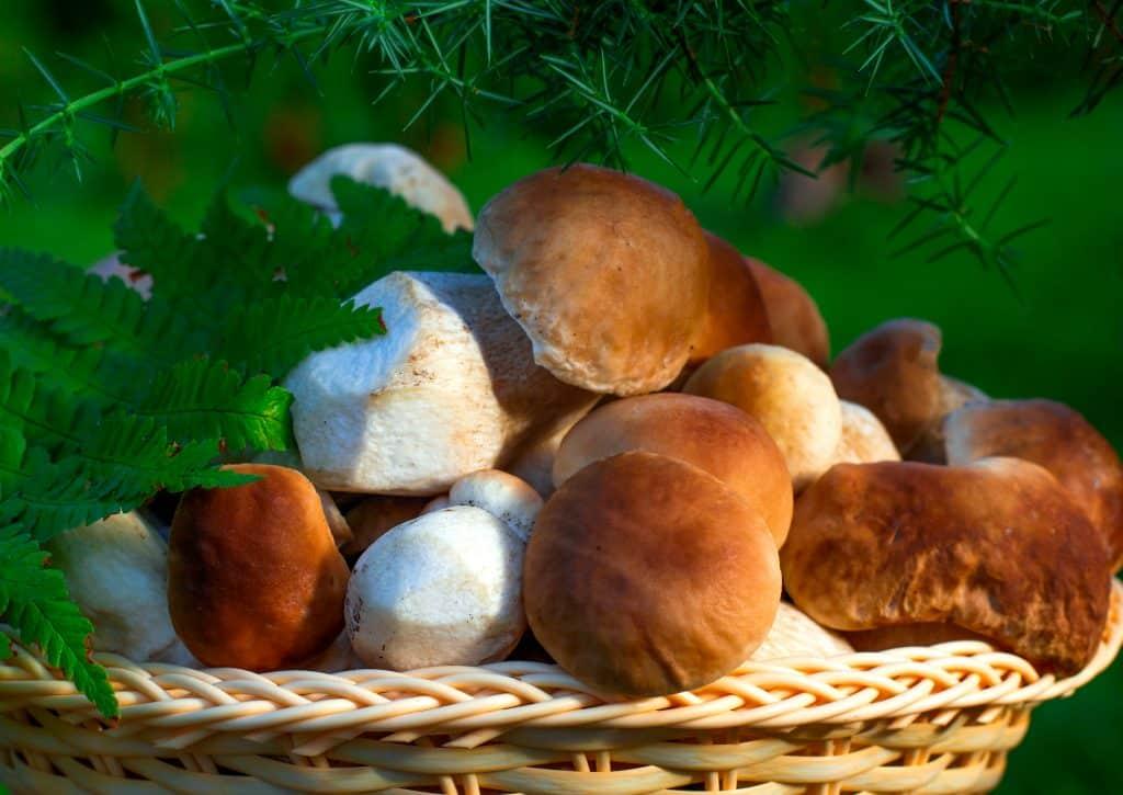 Все грибные места в Ленинградской области в 2019 году: смотреть на карте, грибы июль, август, сентябрь где и какие собирать
