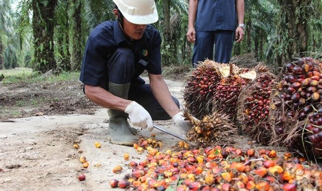 Повышение НДС на пальмовое масло: повлияет ли на стоимость продуктов