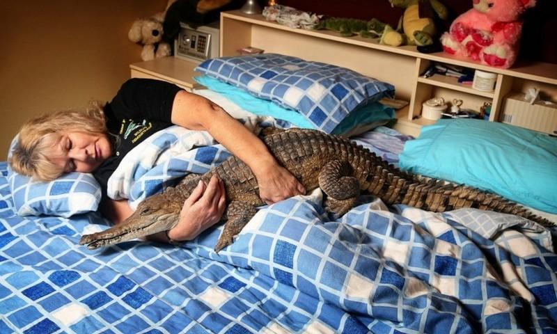 Список животных, которых нельзя содержать дома утвердил Дмитрий Медведев