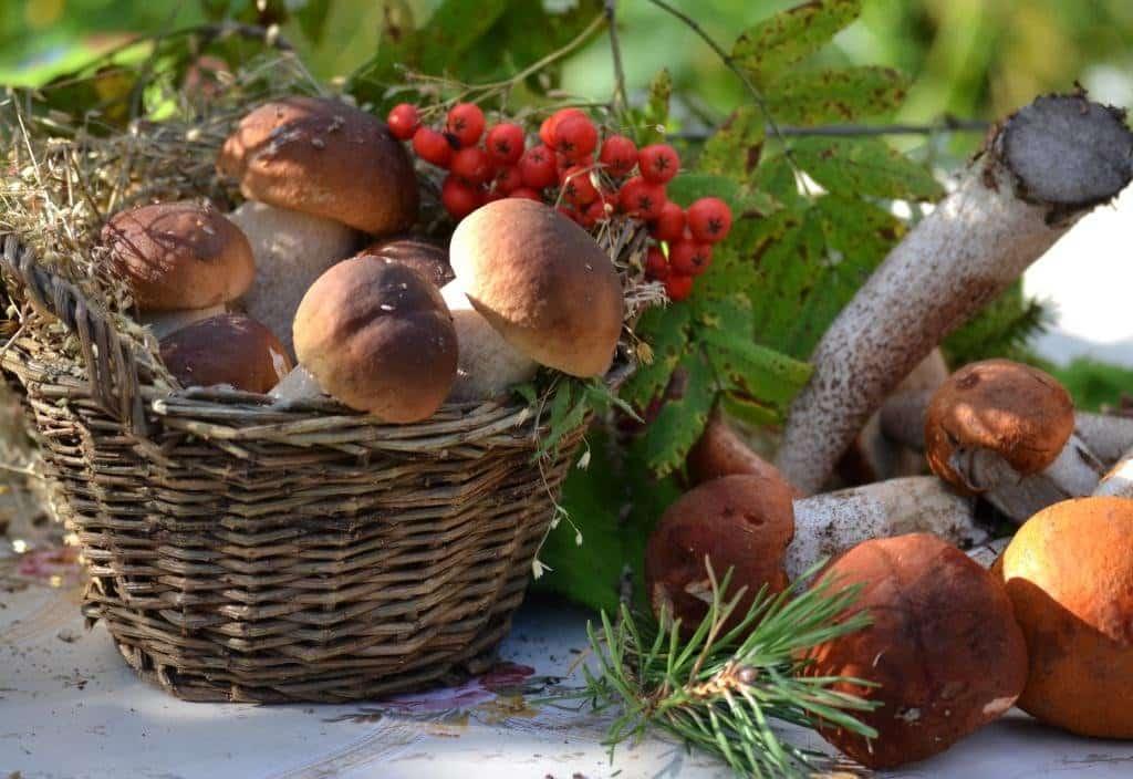 Когда начнется грибной сезон в Подмосковье в 2019 году: лучшие грибные места
