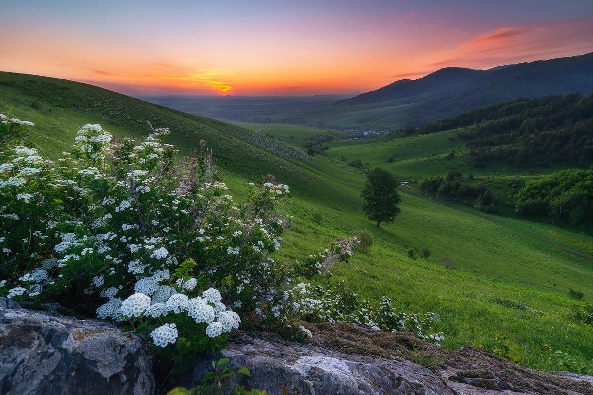 Погода на Алтае в июле 2019 года: долгожданное тепло и небольшие осадки, прогноз гидрометцентра