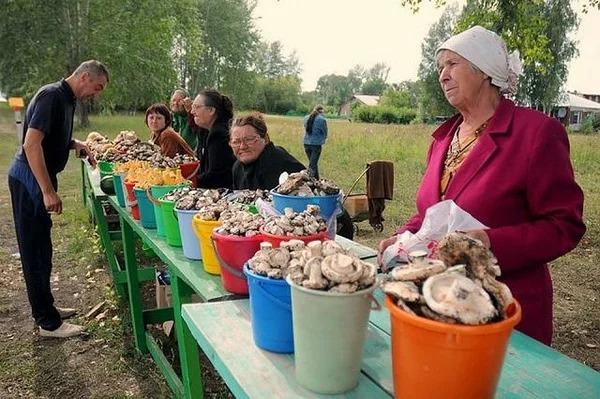 Налог на грибы и ягоды в России: можно ли собирать бесплатно в 2019 году