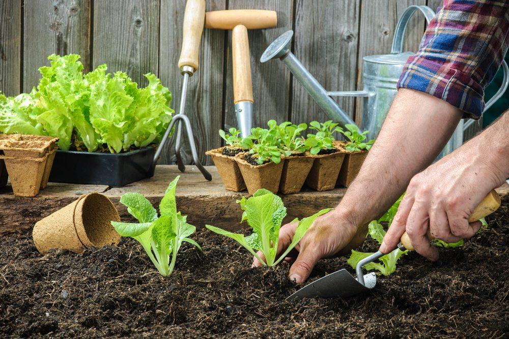 Лунный календарь садовода и огородника на июль - август 2019 года: рекомендации