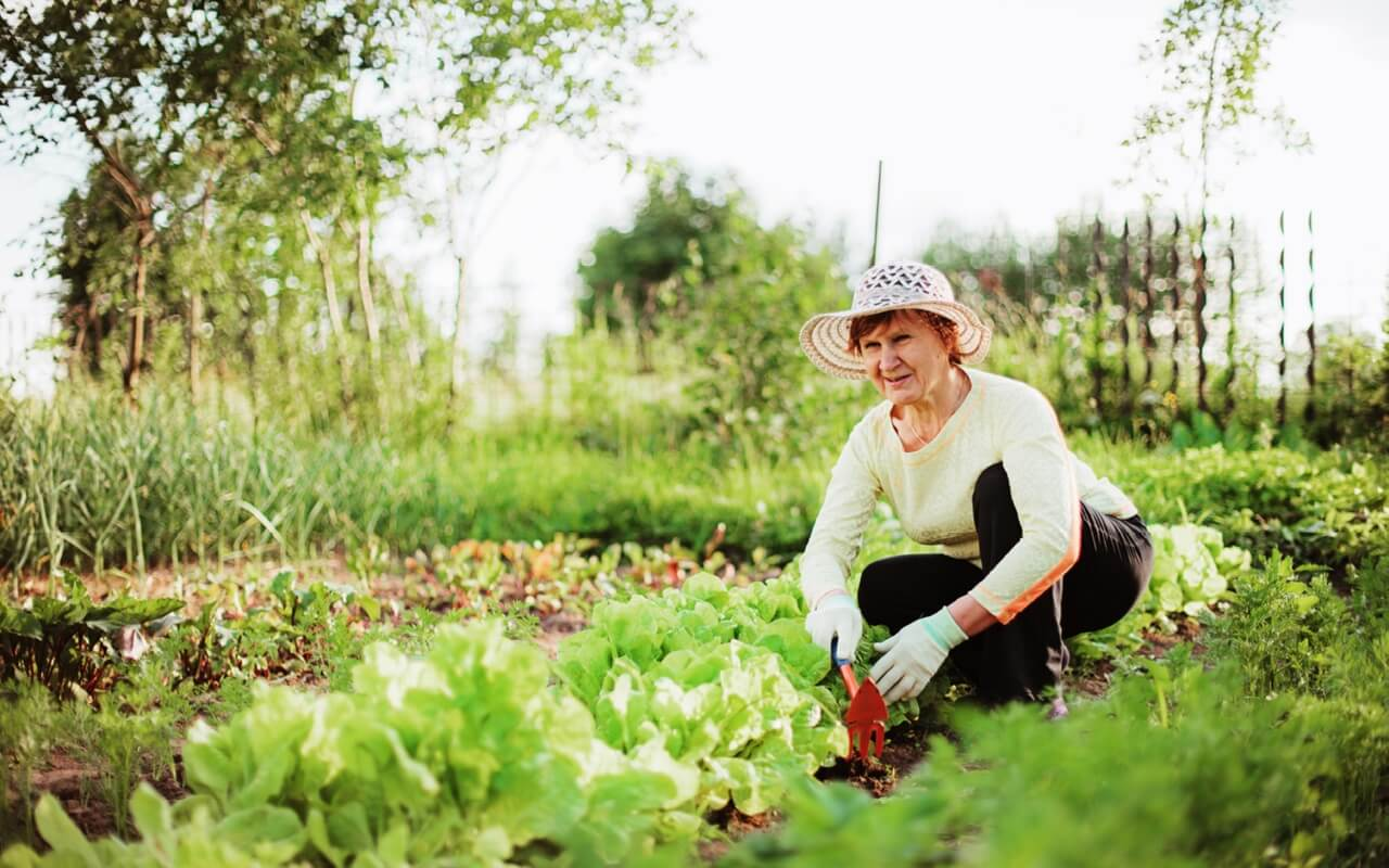 Календарь садовода и огородника на июль 2019: благоприятные дни для работы, рекомендации по дням