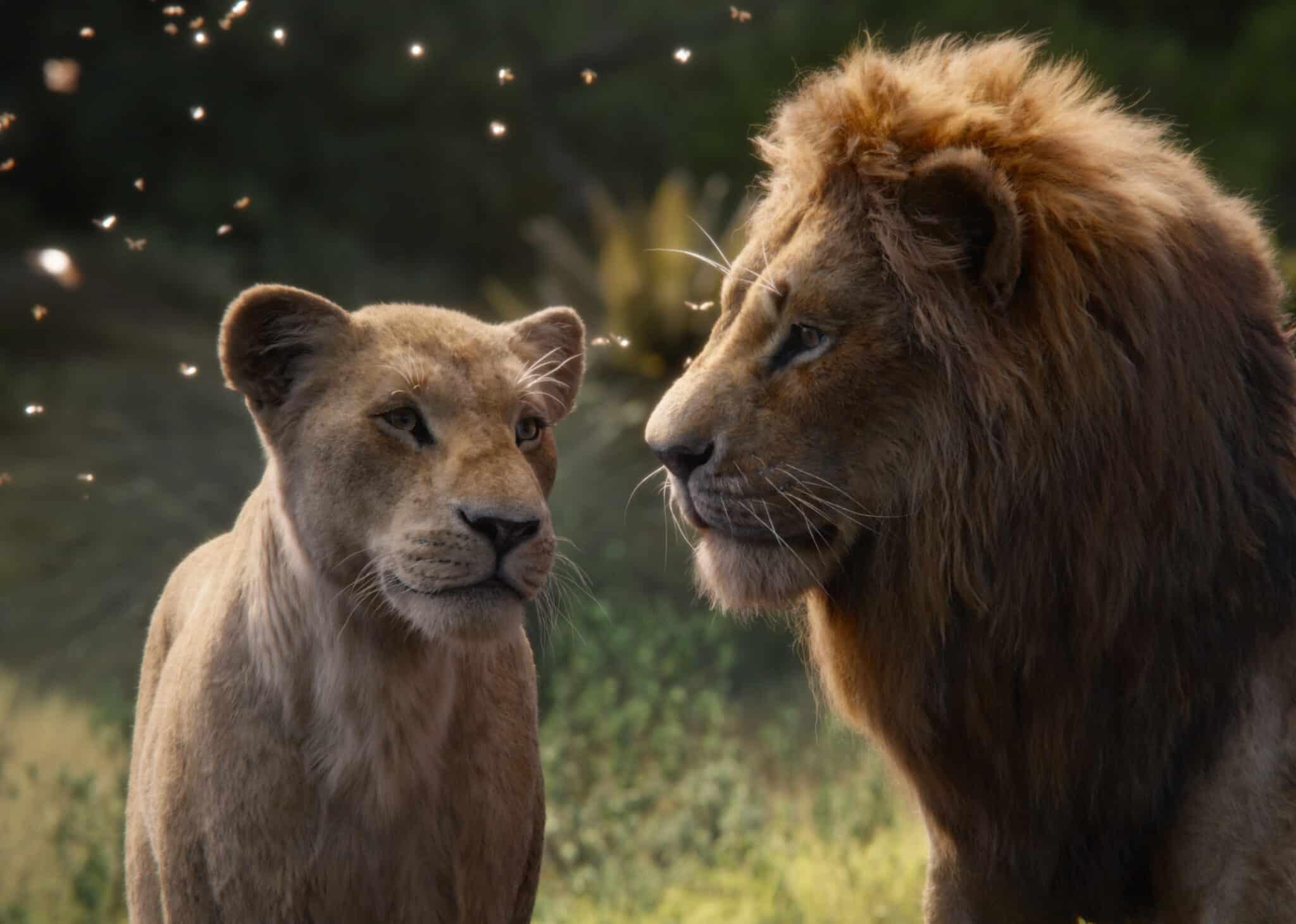 Король лев (2019): как снимался фильм, трейлер, кто сыграл главные роли. Премьера нового фильма