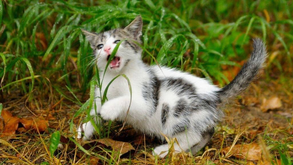 Почему домашние коты едят обычную траву: что говорят зоологи