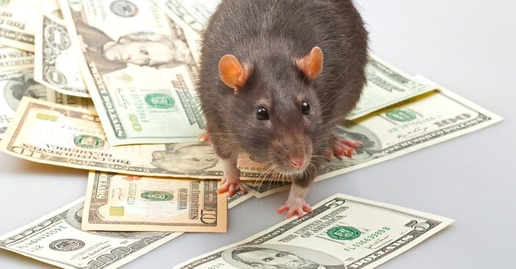 2020 год какого животного будет: каким будет год Крысы?