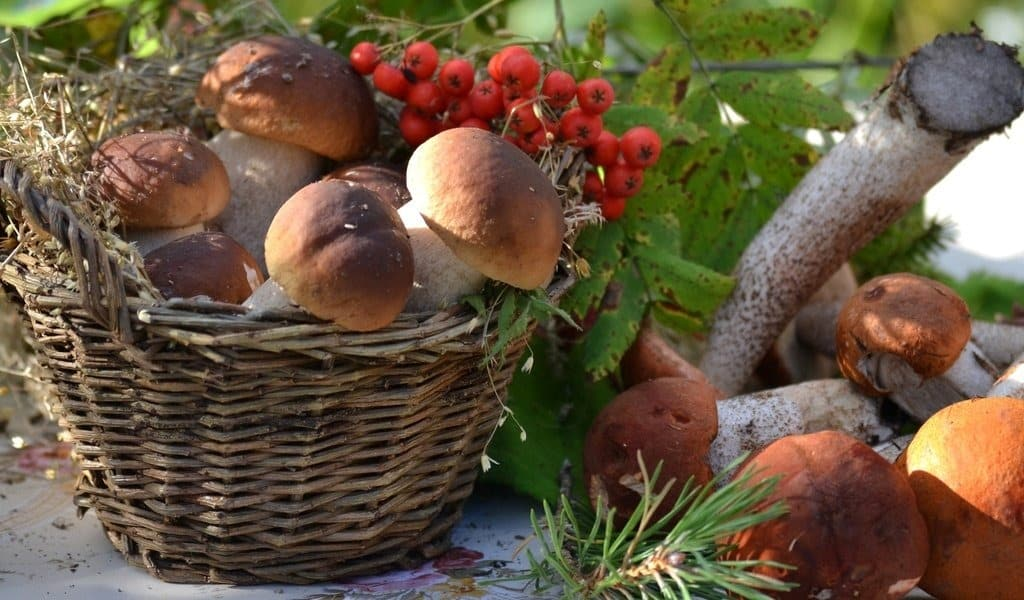 Налог на сбор грибов и ягод в России: введён или нет, причины появления слухов о налоге