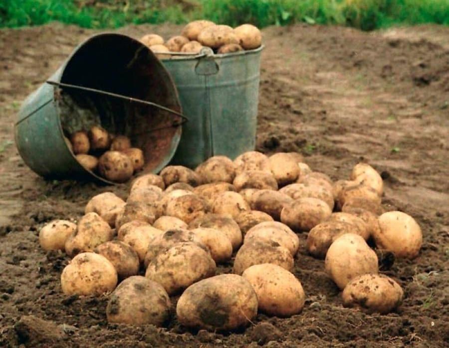 Когда копать картошку в 2019 году по лунному календарю — благоприятные и неблагоприятные дни