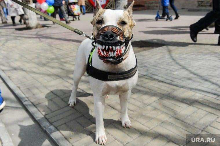 Собачий закон в России: какое наказание хозяевам собак грозит за нападение на людей