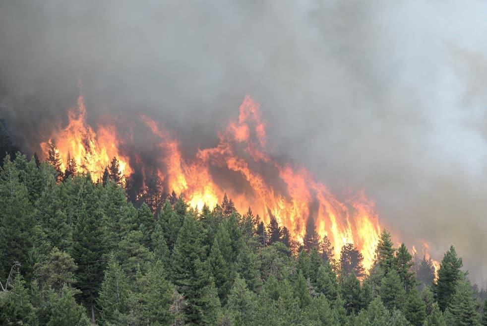 Как сейчас происходит тушение пожаров в Сибири: когда потушат, последствия