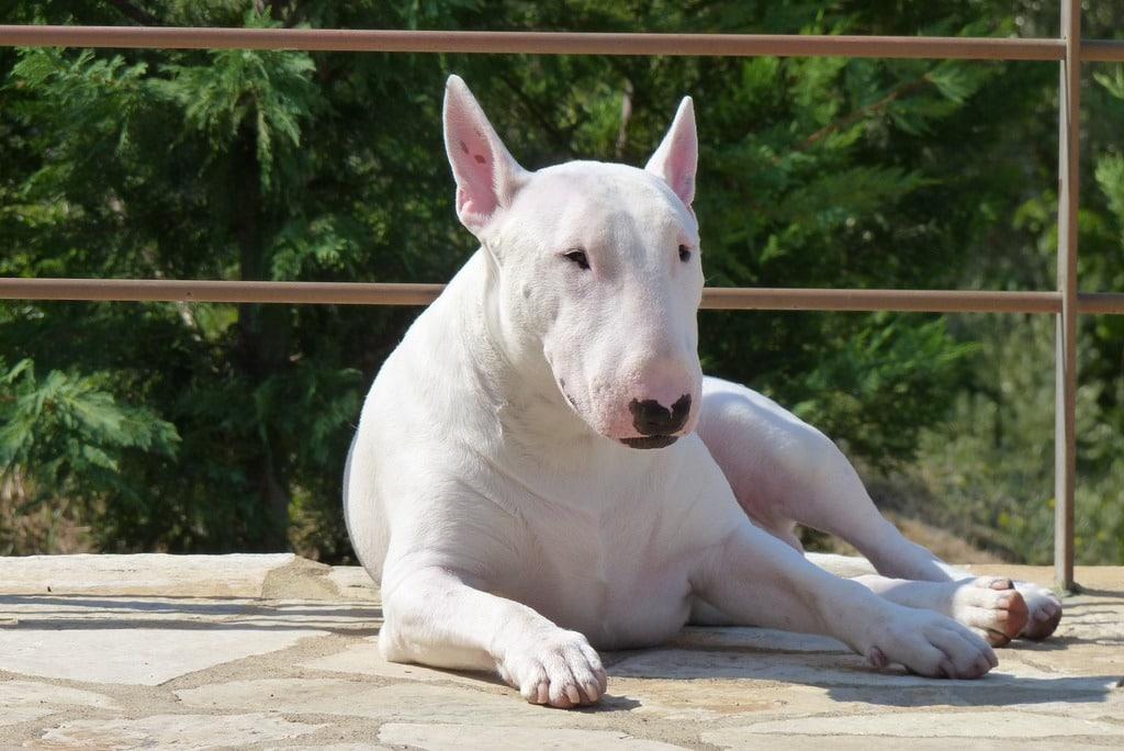 Опасные собаки, список пород обнародован МВД России