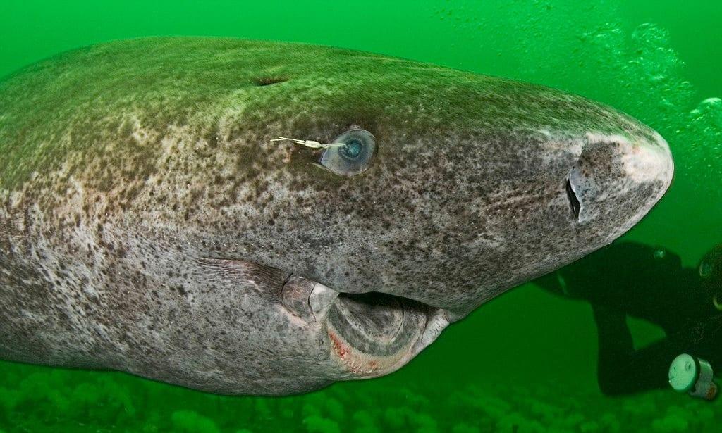 Где обнаружено Морское чудовище: как оно выглядит, новое видеосвидетельство существования морского чудовища