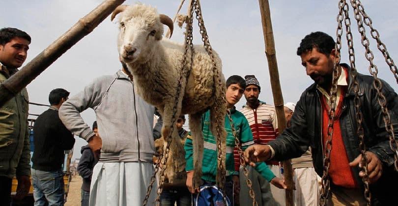 Курбан-Байрам 2019 года: какого числа начинается и заканчивается, традиции и обычаи, правила жертвоприношения, традиционные блюда