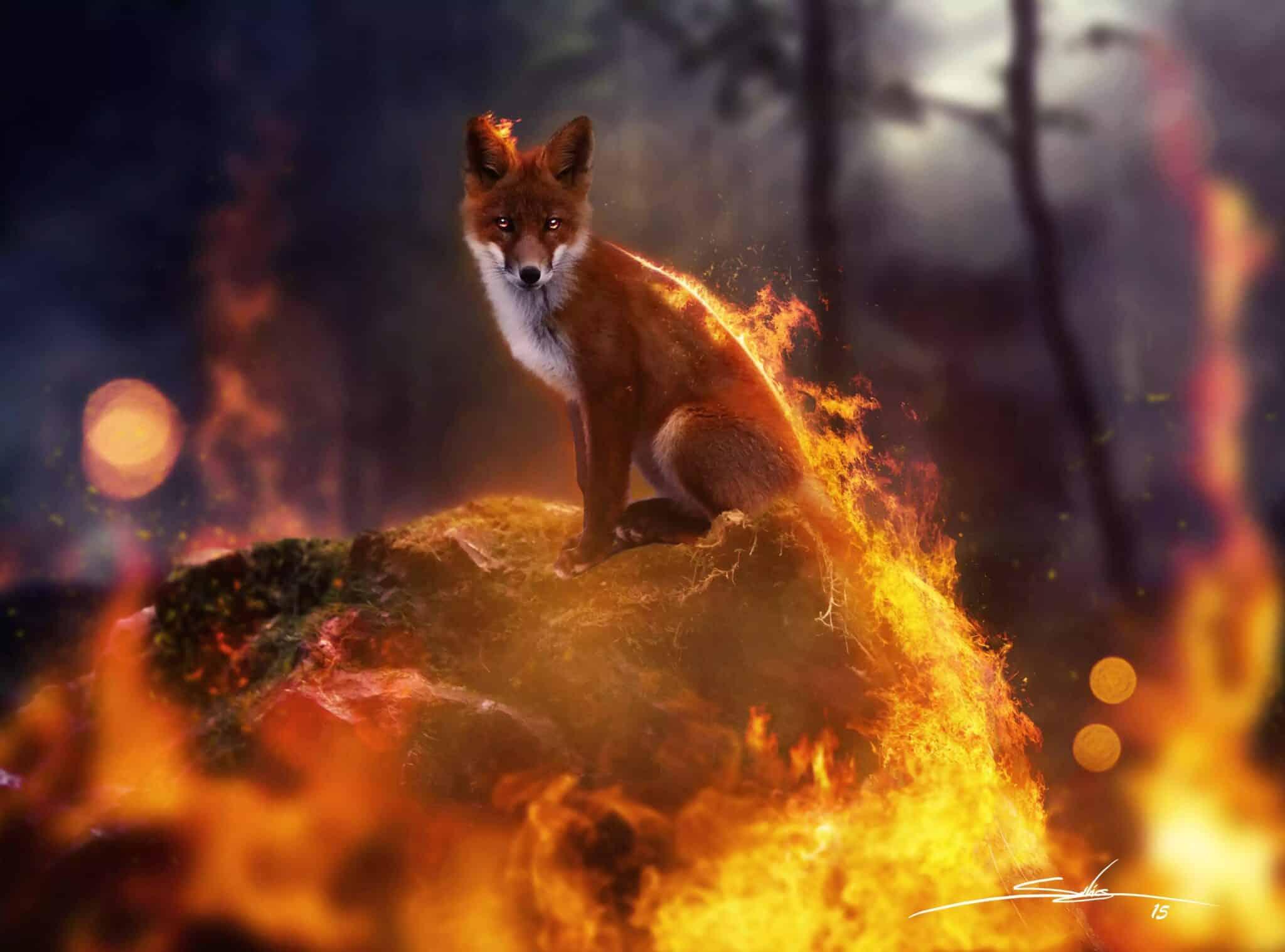 Как спасаются животные от пожара в Сибири: последствия пожара