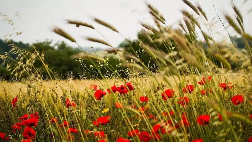 Какой церковный праздник сегодня 27 августа 2020 чтят православные: Михей Тиховей отмечают 27.08.2020
