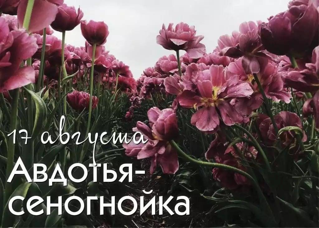 17 августа - Авдотья Сеногнойка по церковному календарю
