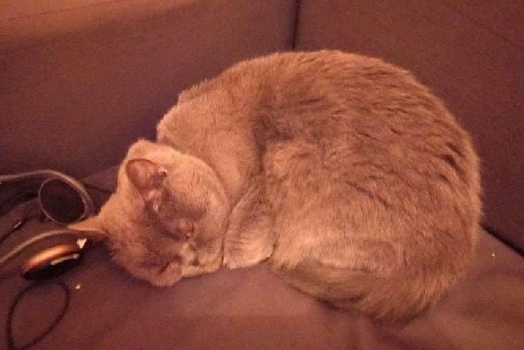 В Ростове-на-Дону продают кошку-целительницу за 15 млн рублей