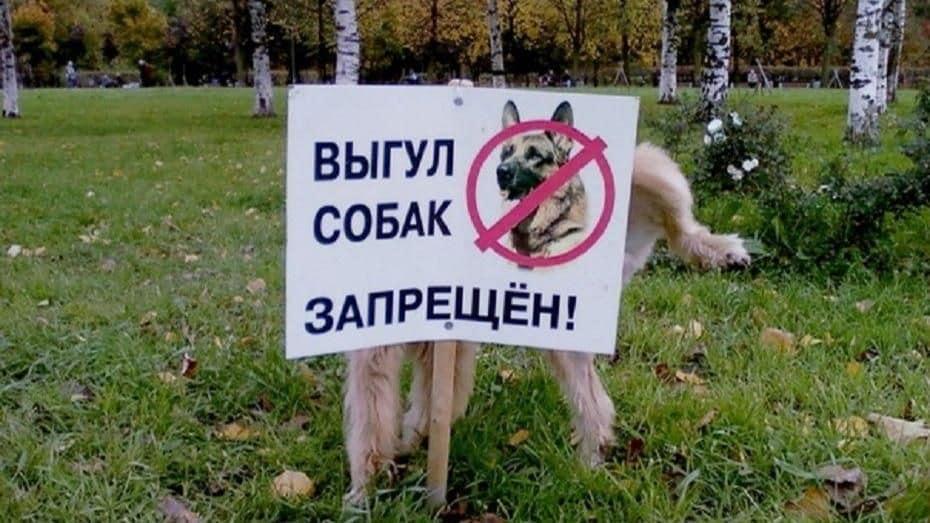 Закон о выгуле собак: когда был принят, какие породы попали под его действие, мнение экспертов