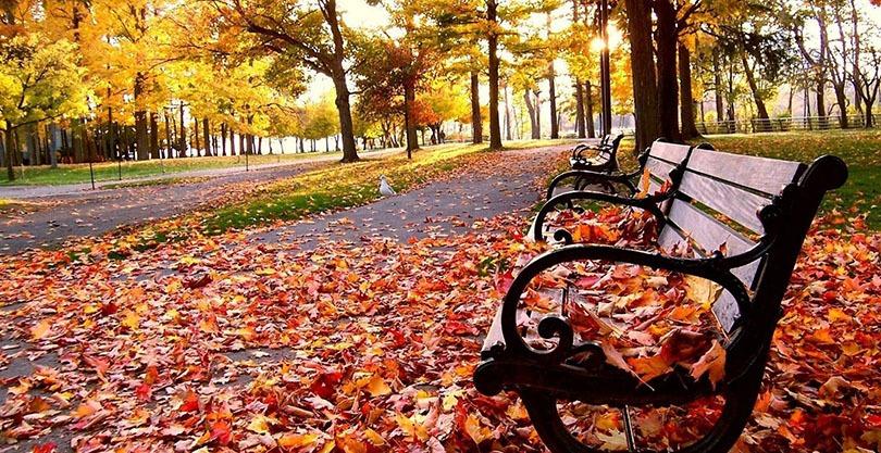 Какая будет осень 2019 в России: погода осенью, прогноз на сентябрь, октябрь и ноябрь 2019