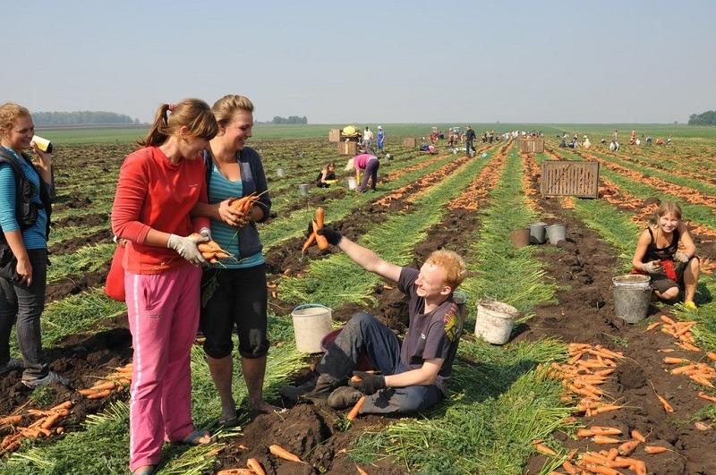 очень полезна картинка как убирают урожай пострадавших нет