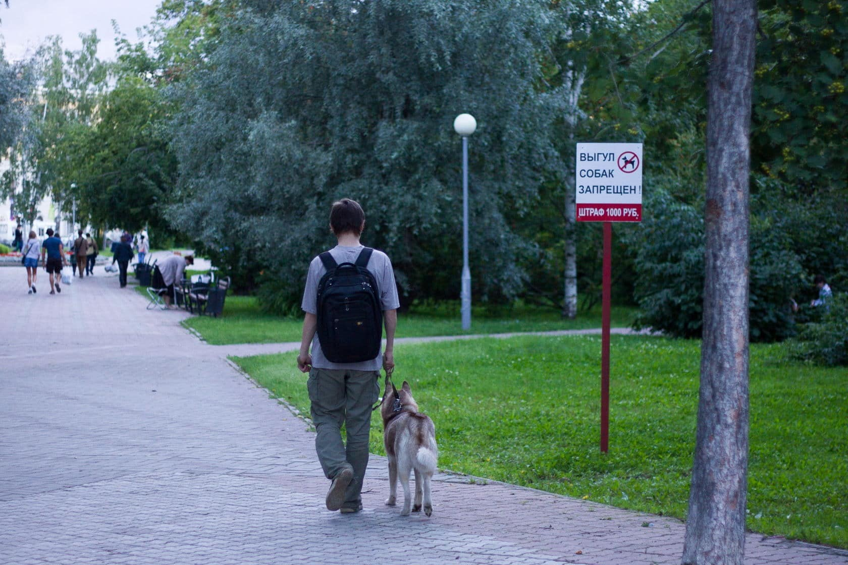 Где можно выгуливать собаку, если нет специальной площадки: по закону, новые правила выгуливания собак