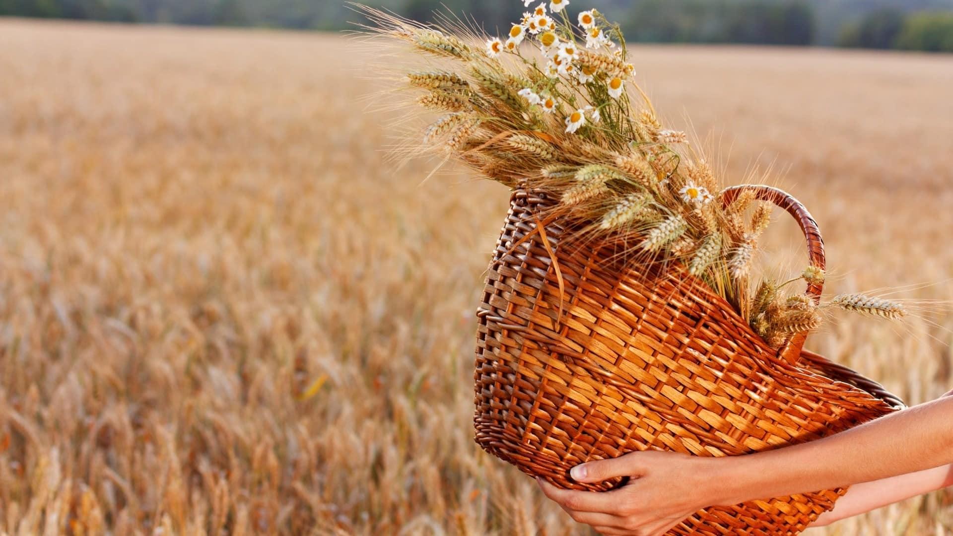 Какой церковный праздник сегодня 18 августа 2020 чтят православные: Евстигней Житник отмечают 18.08.2020