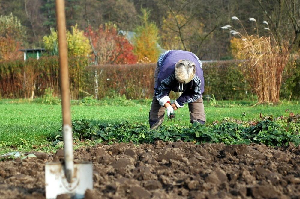 Посевной календарь сентябрь 2019: на каждый день, все благоприятные дни для огородных и садовых работ