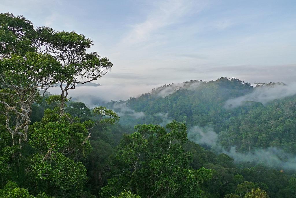 Где самый чистый воздух на планете: 10 государств с самым чистым воздухом