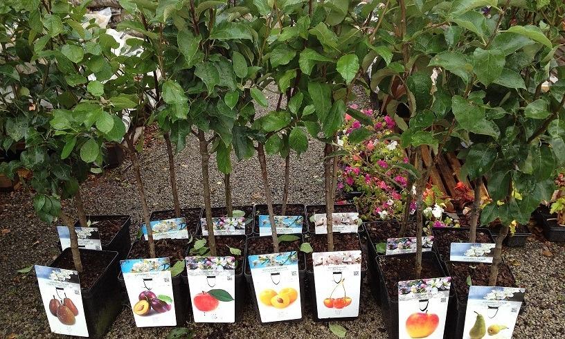 Какие осенние работы в саду и огороде проводят в сентябре 2019 года