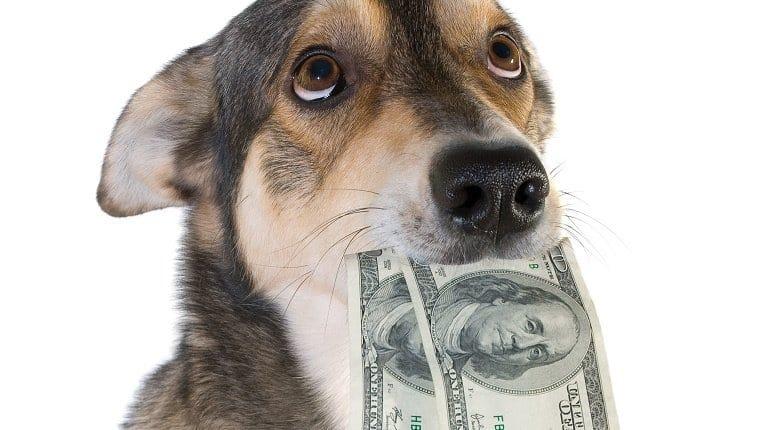Налог на домашних питомцев: кто и за что будет платить, когда введут
