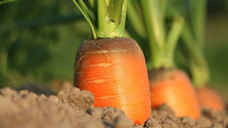 Календарь огородника-садовода на сентябрь 2019: эксперты рассказали, как ухаживать за растениями. Что и когда нужно делать. Благоприятные дни в сентябре
