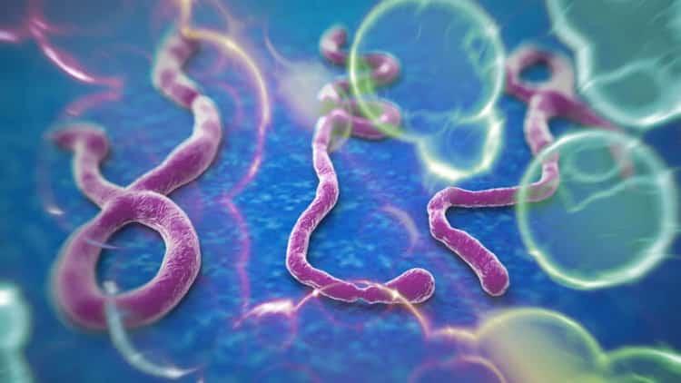 Правила защиты от вирусных инфекций в общественных местах: элементарные правила защиты от вирусных инфекций