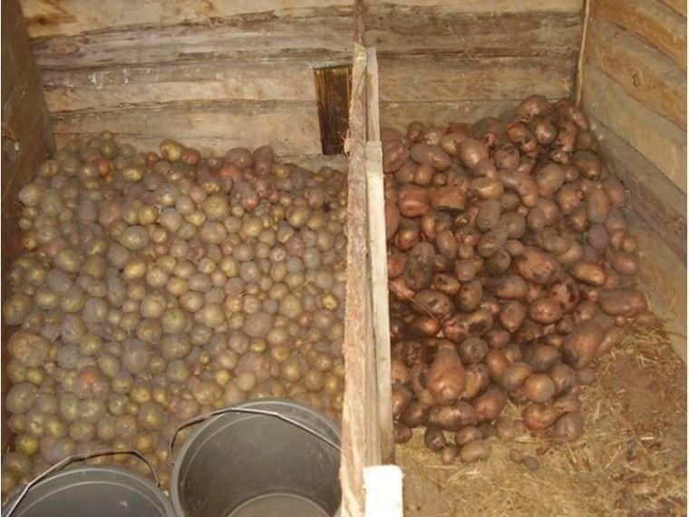 Когда правильно засыпать картофель в погреб: подготовка погреба к хранению картофеля