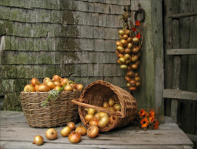 Какой церковный праздник сегодня 20 сентября 2020 чтят православные: Луков день отмечают 20.09.2020