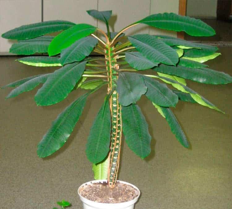 Самые опасные обитатели подоконника: эксперты назвали тройку самых опасных комнатных растений